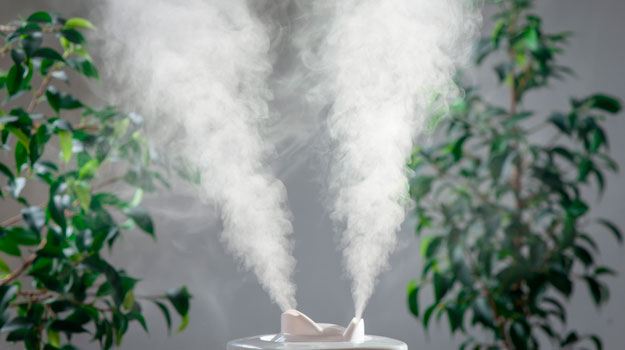 humidifier-in-house-plants-background | Humidifer | Wet Cough: Causes and Treatment